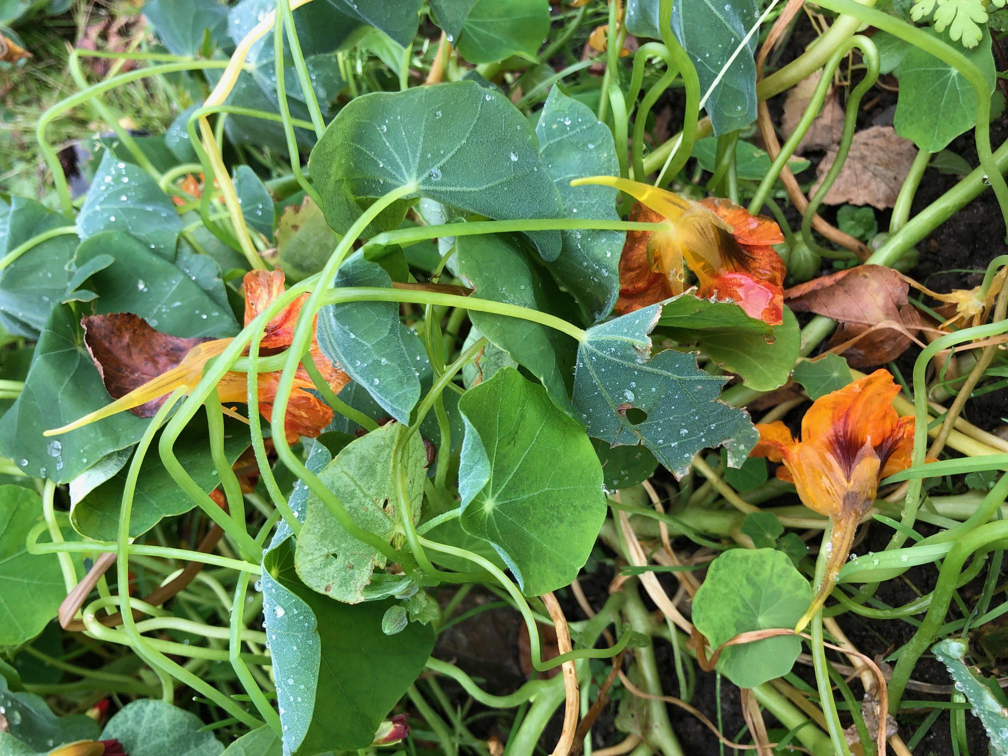 Oktober og den første frost