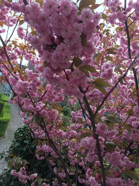 Et træ står ikke i fuld flor hele året og bare blomstrer og blomstrer…