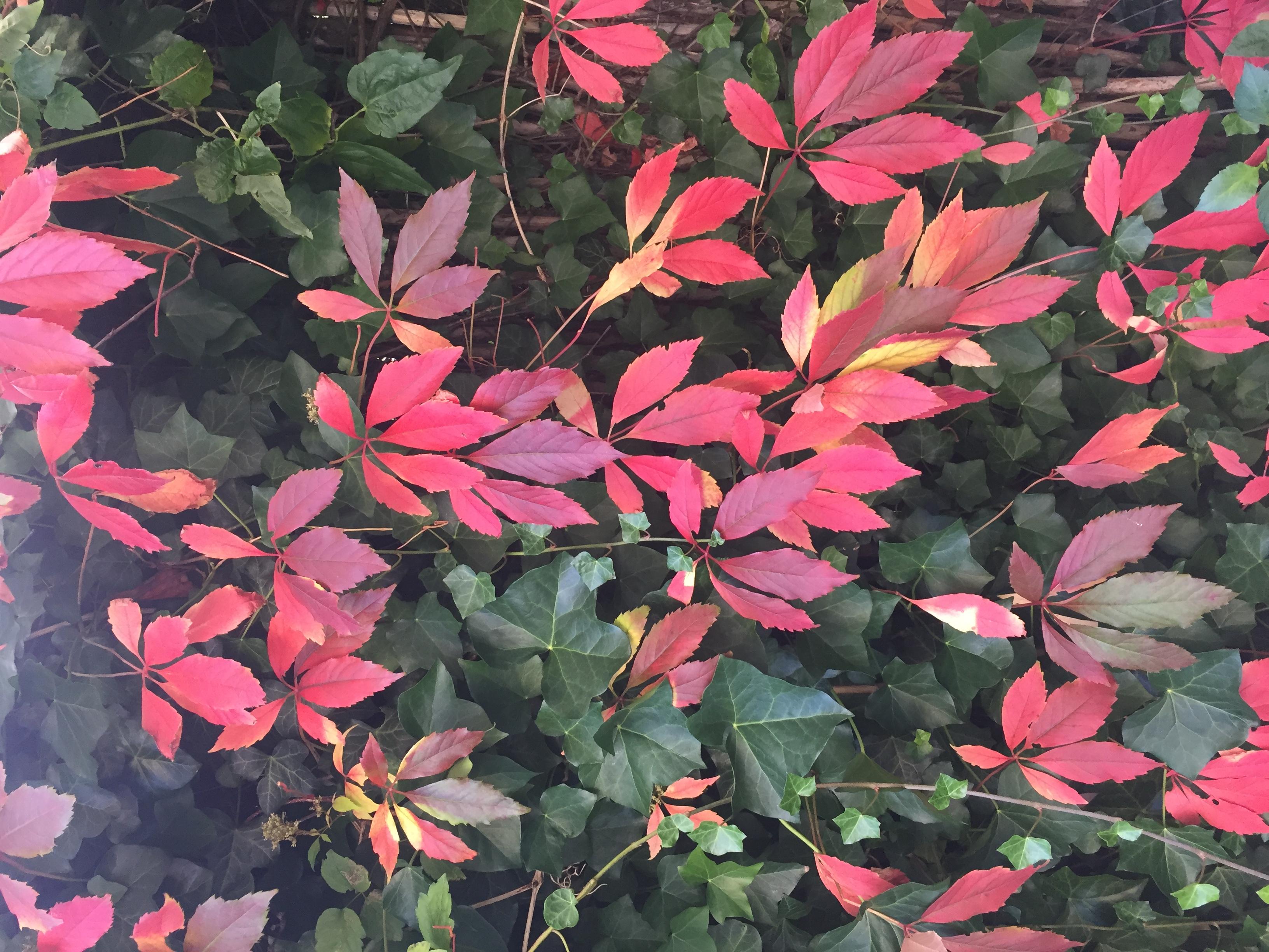 Oktober…jeg overgiver mig til efteråret…